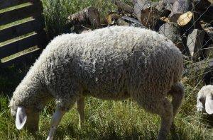 Hladkanie zvierat - Állatsimogató